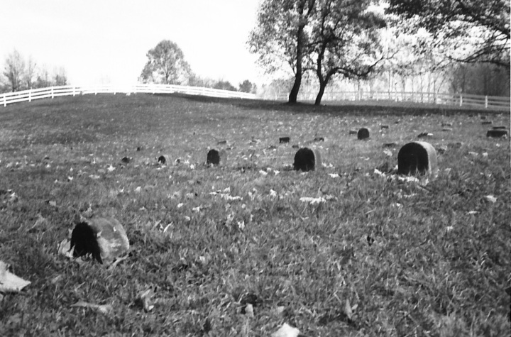 The low, simple stones of the burial ground behind the Winona Friends meetinghouse maintain a witness of simplicity. I find them together to be elegant.